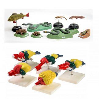 Модели по зоологии